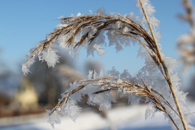 Foto winter 2012 rijp - 2